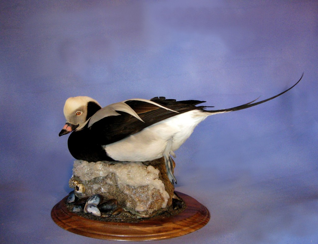 Taxidermy in Long Island Ny