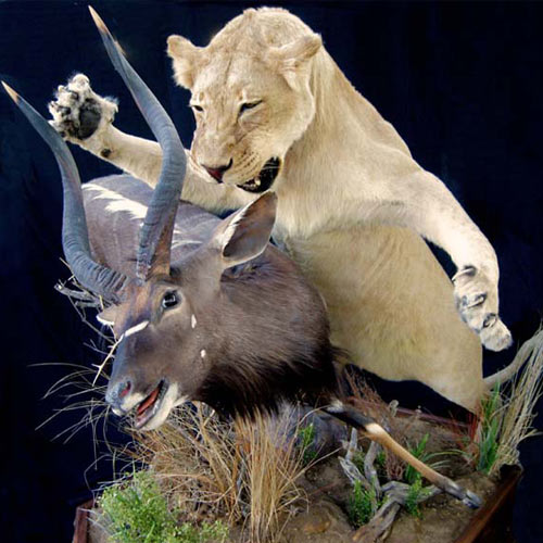 Mike Walsh Taxidermy