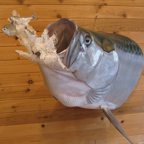Welcome to mike walsh taxidermy near long island ny for Fish taxidermy near me