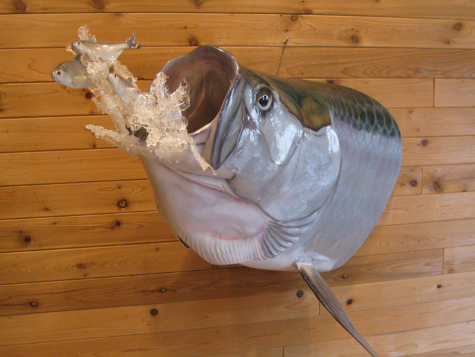 Fish mike walsh taxidermy for How to taxidermy a fish